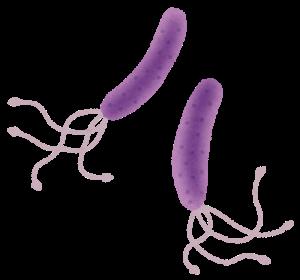 ピロリ菌のイラスト